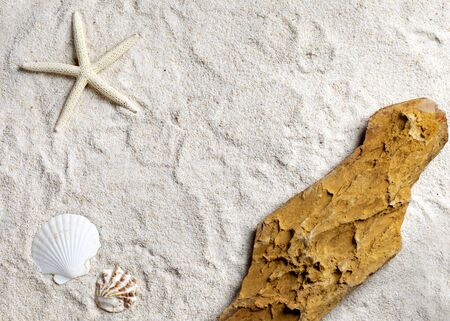 Sea concept background decorated with seashell starfish sand border frame photography