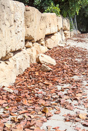 yellow stone: Yellow stone wall and dried tree leaves Stock Photo