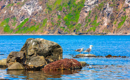 affinity: Two seagulls stand on a rock in an ocean bay with blue water
