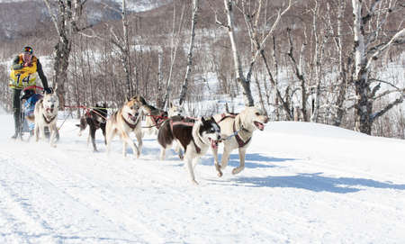 Kamchatka, Russia - February 24, 2017: Traditional Kamchatka Dog Sledge Race Elizovsky sprint