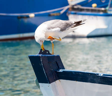 the Seagull on the prow