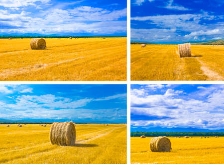 big round bales of straw in the meadow Foto de archivo