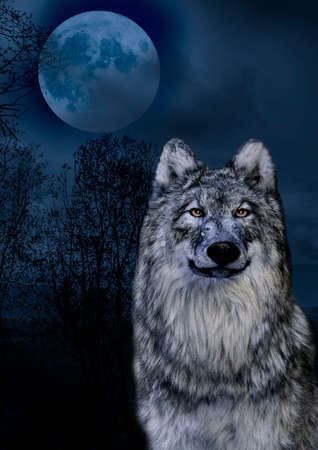 Wolf and the moon in the midnigt