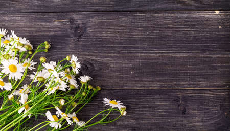 Chamomile flowers on a old  wooden background Banco de Imagens