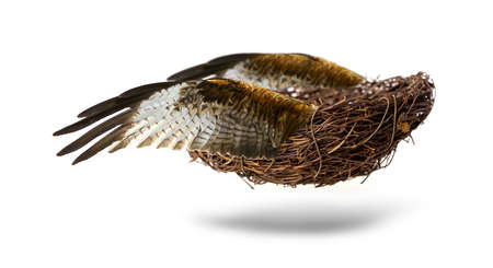 Empty nest with wings isolated on white background