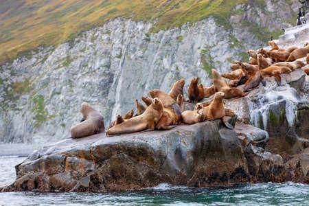 Steller sea lion sitting on a rock island in the Pacific Ocean on kamchatka peninsula Stock fotó