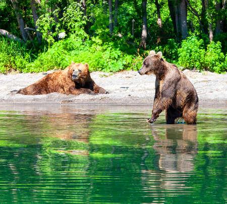 The Kamchatka braun bear on the big lake Stok Fotoğraf - 131787989