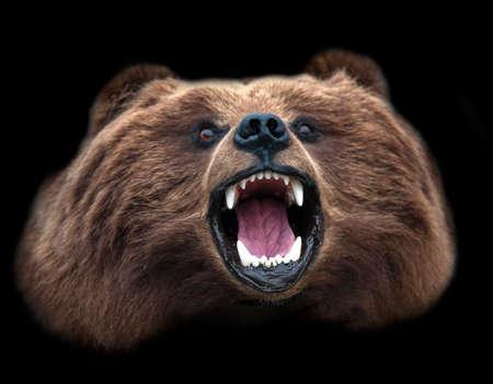 A Stuffed Kamchatka brown bear Head isolated on black background Stok Fotoğraf - 132447082