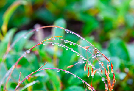 The Drops of dew on the grass. Selective focus Stock fotó