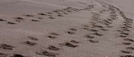 The Foot prints in the black sand. Black sand on the beach. Selective focus Imagens