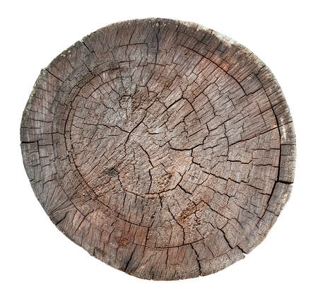 The Wooden old stump, wood texture background isolate on white