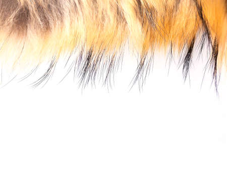 The Polar Fox fur as texture or background