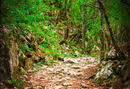 ancient stone road in green forest. Selective focus