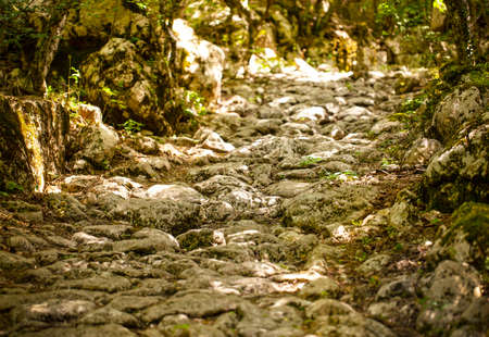 Selective focus. The ancient stone road in green forest
