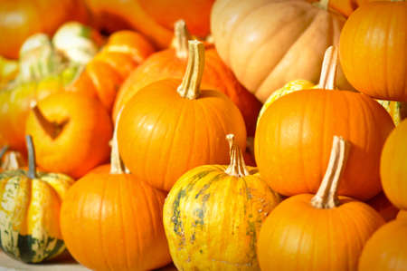 jack o latern: Pumpkin and Jack o Latern ready for Halloween