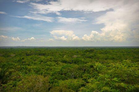 Bovenaanzicht van het regenwoud Stockfoto