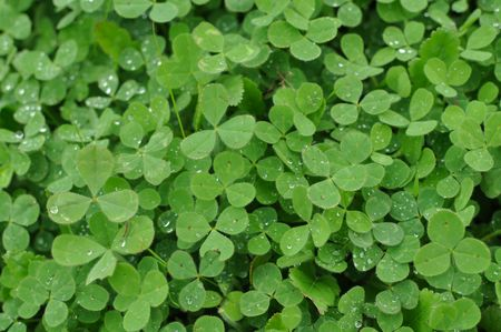 Verticle Green Clover Shamrock Background for St. Patricks Day Stock Photo - 6443312