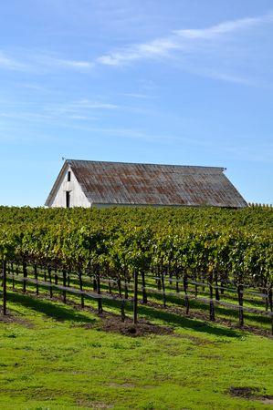 Vineyard with Old Barn Фото со стока
