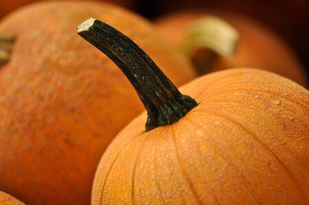 large pumpkin: Pumpkin Stock Photo