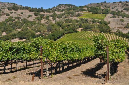 napa: Napa Valley California Winery Stock Photo