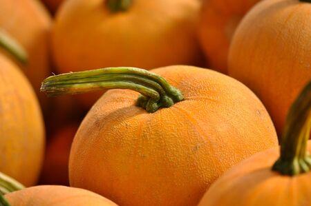 large pumpkin: Pumpkins Stock Photo