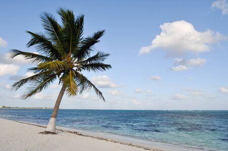 Palm Tree on a Beach photo