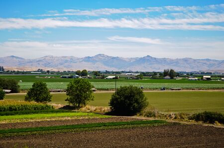 Agriculture Farm in California photo