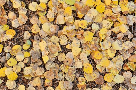 Fall Leaves Background photo