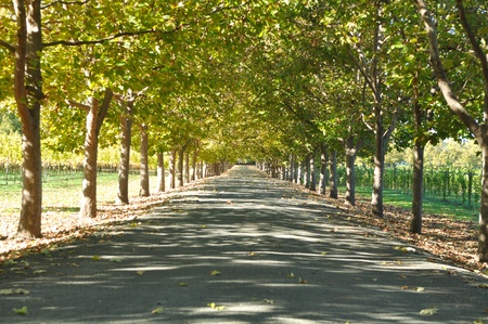 Alley of Trees on a Summer Day Stockfoto