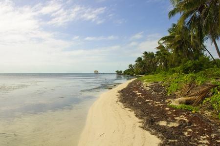 Caribbean Beach in Ambergris Caye, Belize photo