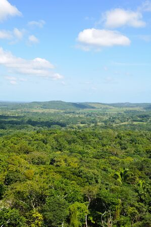 Tropical Rainforest Canopy photo