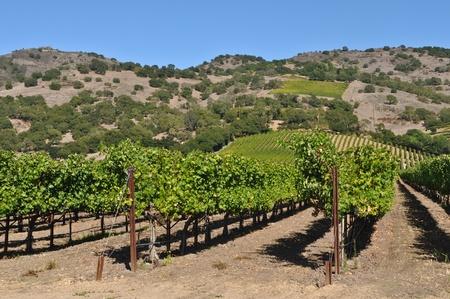napa: Napa Valley Winery in California Stock Photo