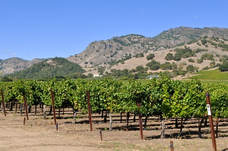 Napa Valley California Vineyard photo
