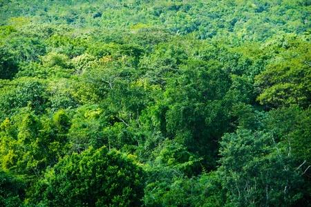 Tropischer Regenwald im Hintergrund