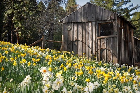 wheel house: Cabin at Daffodil Hill Tourist Attraction California in Spring
