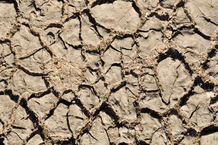 Cracked Dirt Background photo
