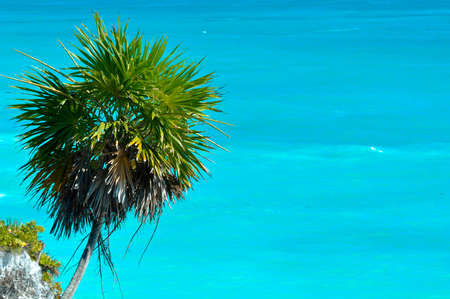 Palm Tree with Ocean Background photo
