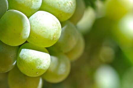 Green Grapes Close Up photo