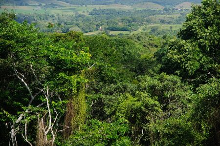 belize: rain-forest background Stock Photo