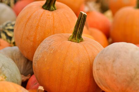 large pumpkin: Pumpkins for Sale Stock Photo