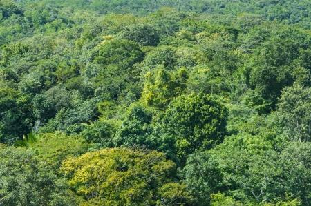 Regen Wald Hintergrund