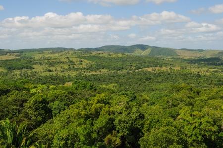 distant: Tropical Rainforest Stock Photo
