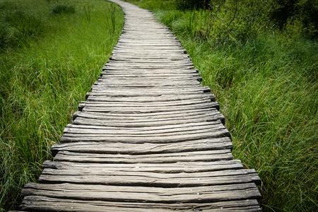 boardwalk trail: Wooden Boardwalk Hiking Trail