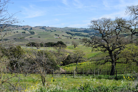 napa: Napa Valley California Vineyard in Spring