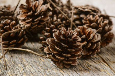Pinecones on Rustic Wood Background photo