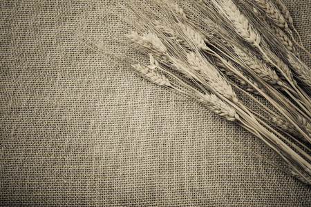 Wheat Ears over Burlap background photo