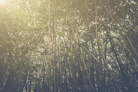 Retro Bamboo Forest with Sunlight