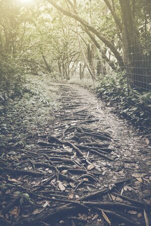 Retro Hiking Trail with Sunlight photo