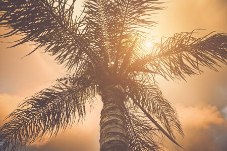 date palm tree: Palm Trees with Style Retro Filter