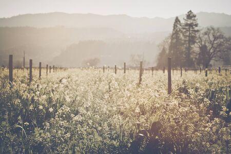 vi�edo: Vi�edo en primavera con estilo pel�cula de la vendimia Filtro